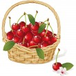 Cherry basket - Stock Vector