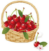 Cherry basket — Stock Vector