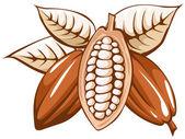 Cocoa bean — Stock Vector