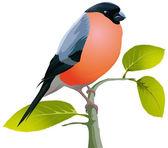 Vacker fågel — Stockvektor
