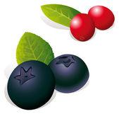 Mirtillo e cranberry — Vettoriale Stock