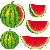 Water melon — Stock Vector