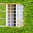 Window surrounded by ivy covered wall — Stock Photo #13382081