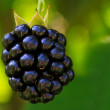 Royalty-Free Stock Photo: Blackberry