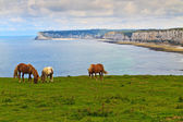 Pferde auf klippen in der nähe von etretat und fécamp, normandie, frankreich — Stockfoto