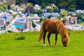 скалы близ этрета и фекам, нормандия, франция — Стоковое фото