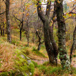 Enchanted Scottish Forest — Stockfoto