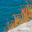 Colorful coastal vegetation — Stock Photo #13474793