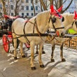 Fiaker horse carriage in Vienna, Austria — Stock Photo #13478693