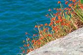 Colorful coastal vegetation — Stock Photo