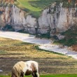 Horse on cliffs near Etretat and Fecamp, Normandy, France — Stock Photo #14331951