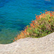 Colorful coastal vegetation — Stock Photo #14332757