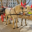 Fiaker horse carriage in Vienna, Austria — Stock Photo