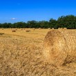 Bales of straw in the field — Stock Photo