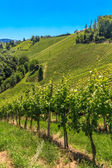 Styrian Tuscany Vineyard near Leutschach, Styria, Austria — Stock Photo