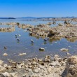 Mono Lake Shore and Tufa Formations, California — Stock Photo