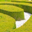 Stock Photo: Ornamental English garden hedges
