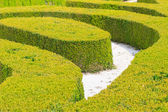 Ornamental English garden hedges — Stock Photo