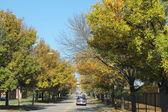 Fall trees — Stockfoto