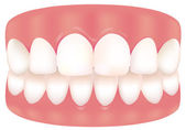 A picture of Tooth — Stock Vector