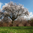 Arbre couleur - Stock Photo