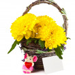 Chrysanthemum flowers in a basket — Stock Photo