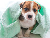 Dog bath towel — Stock Photo