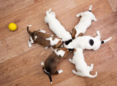 Puppies in around 2 months old — Stock Photo