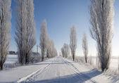 Cesta v zimě — Stock fotografie