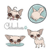 Vector chihuahua setŒ — Stock Vector
