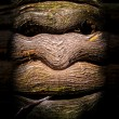 Face in the Woods - Foto Stock