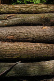 The stems of some trees — Stock Photo