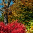Colorful autumn trees - Foto Stock