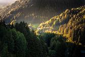 Floresta no vale da montanha de groedner — Foto Stock