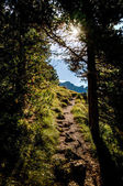 Luz solar cai na floresta — Foto Stock