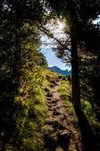 Solljus faller i skogen — Stockfoto