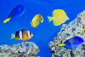 Fish Tank — Fotografia Stock