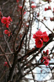 Blossoms — Stock Photo