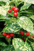 Green and Red — Stock Photo