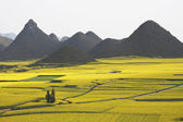 China yunnan province Luoping Rape field Asia — Stock Photo