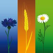 Kamille, ohr und kornblume — Stockvektor