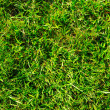 Stock Photo: Green grass background texture
