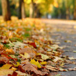 Stock Photo: Footpath strewn with yellow leaves