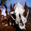 Foto Stock: Mutton skull