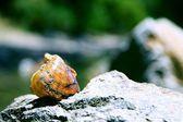 海贝壳 — 图库照片