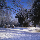 Snowy cemetry in winter sunlight — Stock Photo