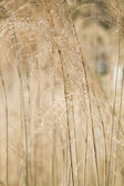 Wild summer grasses — Stock Photo