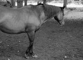 Horse, Thornham Walk,s Suffolk — Stock Photo