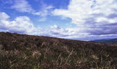 Heathland, Exmoor, 2011 — Stock Photo