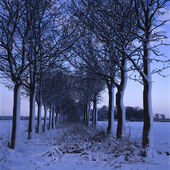Snowy Trees — Foto Stock